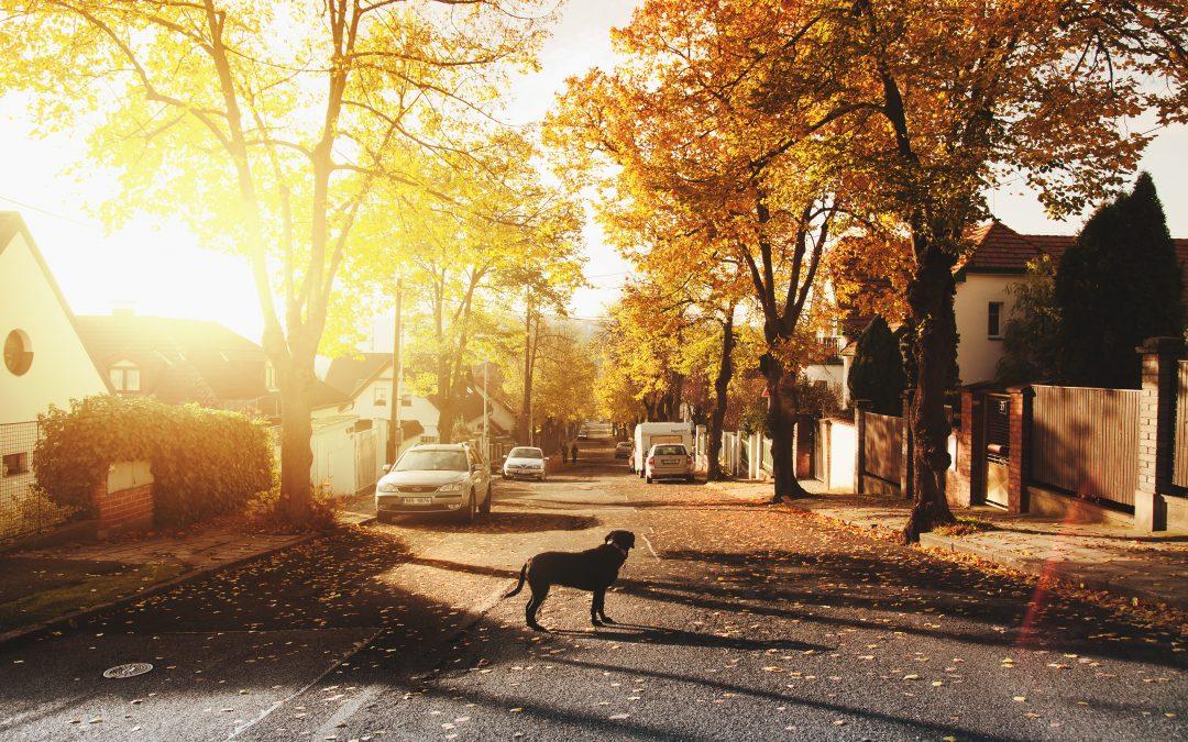 Conducción segura con animales en la carretera